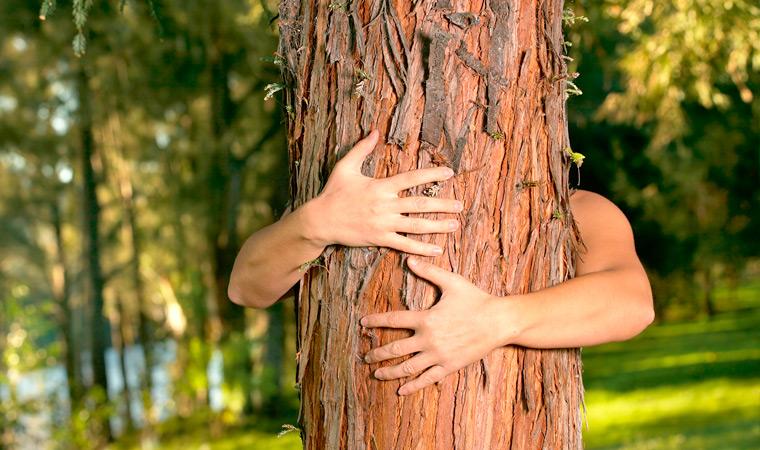 Деревья-лекари