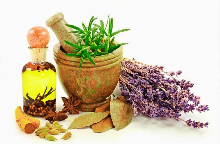 Фитотерапия в медицине - лекарственные растения и лекарственные травы