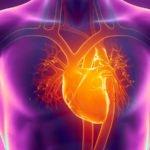 Сердце: какой врач лечит?