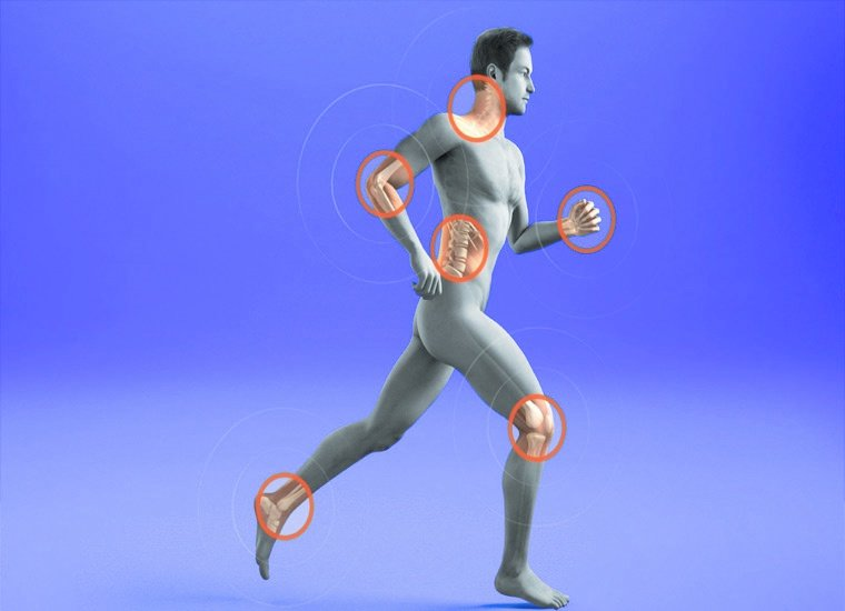 костно-мышечная система человека