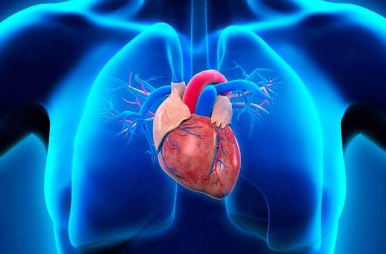 Особенности приема у кардиолога, методы диагностики ССЗ