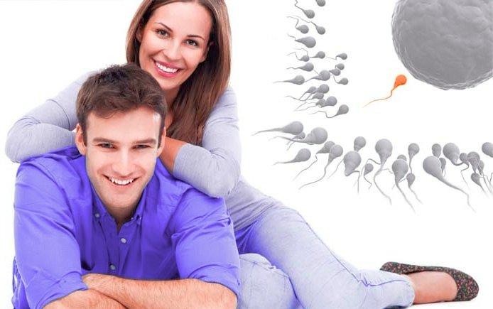 Репродуктивная система мужчины